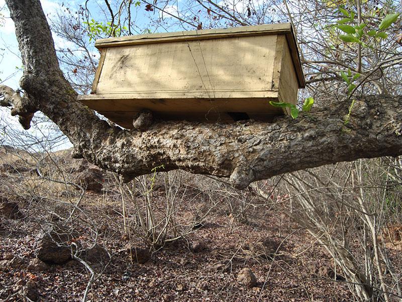 Union des groupements villageois de Tanlili - apiculture